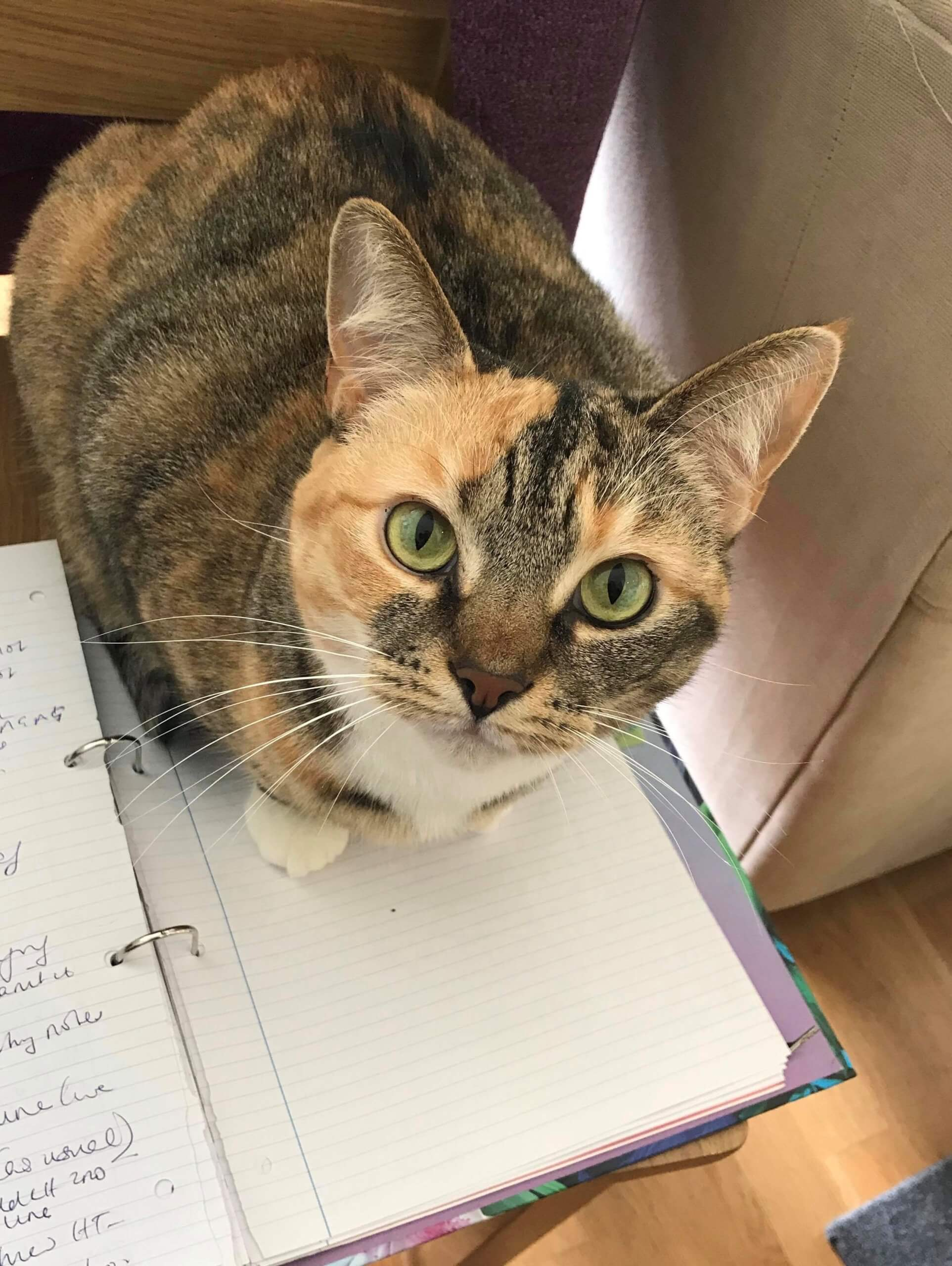 Sasha the cat - her owner is opera student Tim Edmundson